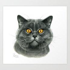 British shorthair cat  G120 Art Print