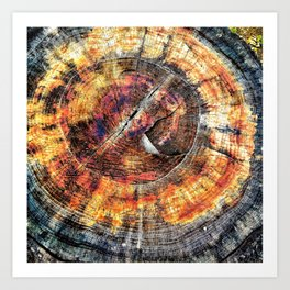 Tree Stump Ring Circle Art Print