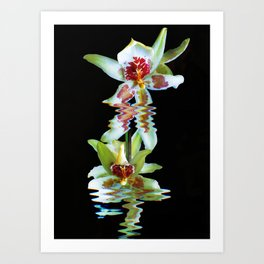 Green flowered Cymbidium Art Print