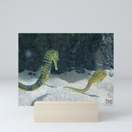 Seahorses Mini Art Print