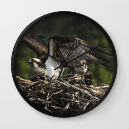 Osprey Mother and Fledgling Wall Clock