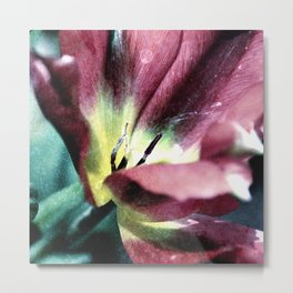 Tulip sensation Metal Print