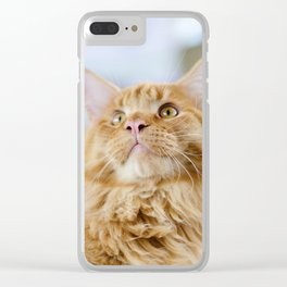 Maine Coon cat Clear iPhone Case