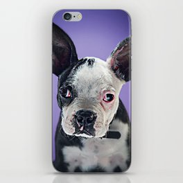Super Pets Series 1 - Super Bugsy 2 iPhone Skin