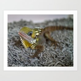 Boyds Forest Dragon Art Print