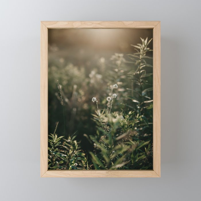 Wild Blossoms | Landscape and Nature Photography Framed Mini Art Print