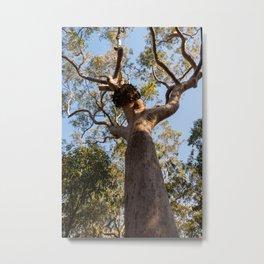 Scribbly Gum Tree, Muogamarra Reserve, Sydney Metal Print