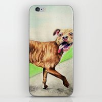pitbull iPhone & iPod Skins featuring pitbull by Shannon Gordy