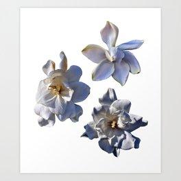 3 White Gardenias [Cecilia Lee] Art Print
