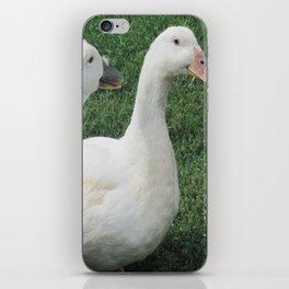 Gossiping Duckies iPhone Skin