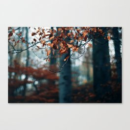 Hibernation Canvas Print