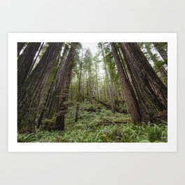 Fern Alley - Redwood Forest Nature Photography Art Print