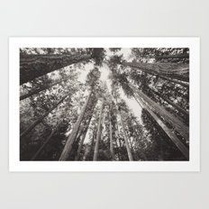Forest Sky - Black and White Tree Sky Art Print