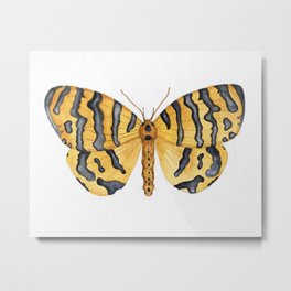 Beautiful Tiger Moth Metal Print