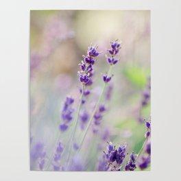 Lavender Loveliness Poster