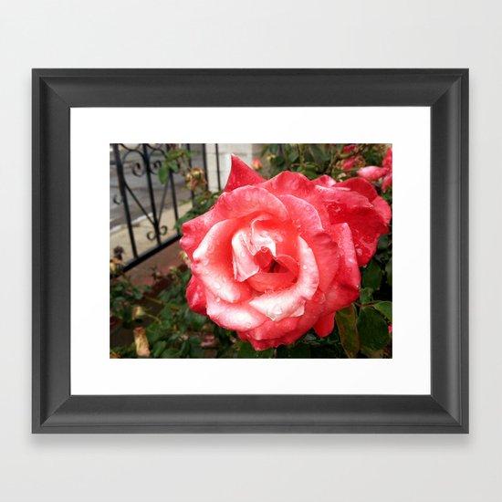 Rainy Day Rose Framed Art Print