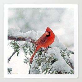 Cardinal on Snowy Branch (sq) Art Print