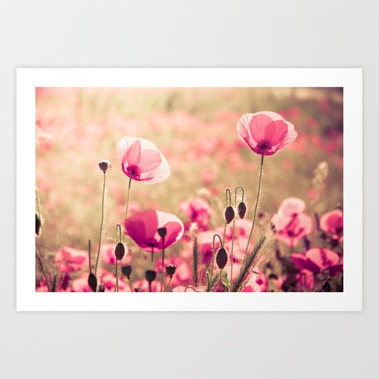 Heaven - poppy flowers photography Art Print