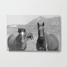 Horses Staring Metal Print