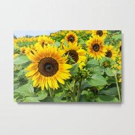 Sunflower Country Garden Metal Print