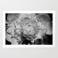 White Beauty Art Print