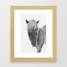 Black and White Icelandic Horse Framed Art Print
