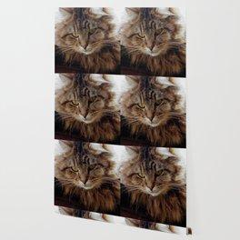 Maine Coon Cat Wallpaper