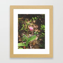Classic Lady Slipper Orchid Framed Art Print