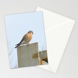 Sparrowhawk (Kestrel) Steel Span 11 Stationery Cards