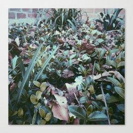 Infinite Shades of Green No. 9 Canvas Print
