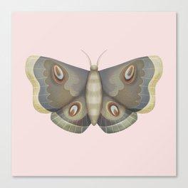 papillon de nuit Canvas Print