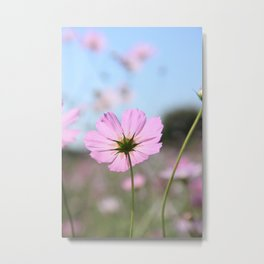 Thoughts of Spring Flowers Metal Print