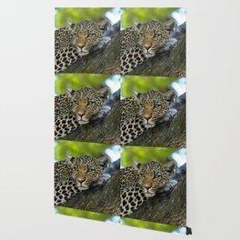 Aqua_Leopard_20180101_by_JAMColorsSpecial Wallpaper
