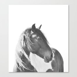 Stallion in black and white Canvas Print