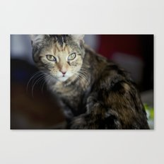 Dolce the Cat Canvas Print