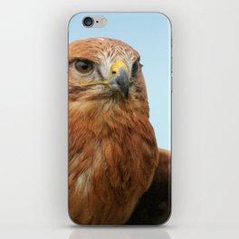 Common Buzzard iPhone Skin