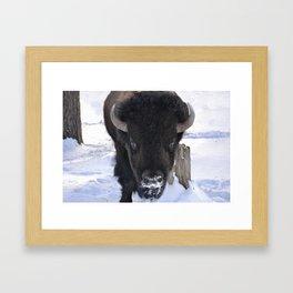 Buffalo Stare Framed Art Print
