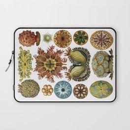 Ernst Haeckel Ascidiae Sea Squirts White Background Laptop Sleeve