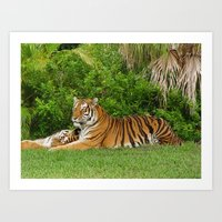 Lazy day at the Zoo Art Print