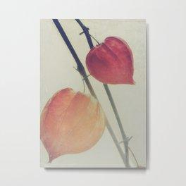 Autumn Botanical, Chinese Lantern - Physalis alkekengi Metal Print