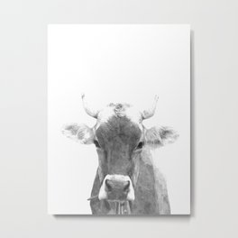 Cow black and white animal portrait Metal Print