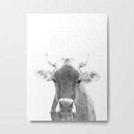 Cow black and white animal portrait Metal Print