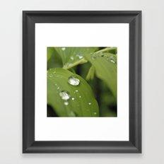 Green Leaves After Rain Framed Art Print