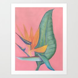 Bird of Paradise (Strelitzia reginae) Art Print