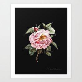 Wilting Pink Rose Watercolor on Charcoal Black Art Print