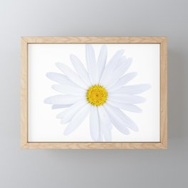 Sunshine daisy Framed Mini Art Print