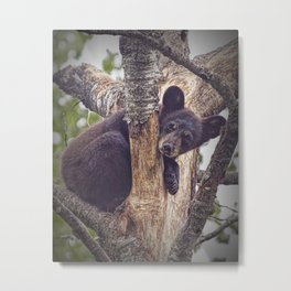Photo of a Black Bear Cub in Northern Minnesota Metal Print