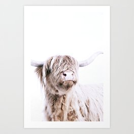 HIGHLAND CATTLE PORTRAIT Art Print