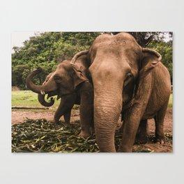 elephant nature park 2 Canvas Print