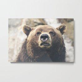 Menacing look of a bear Metal Print